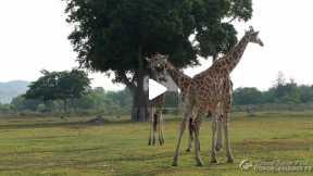 Calauit Safari Park Animals