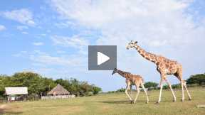 Tour at Calauit Wildlife Safari Park, Busuanga
