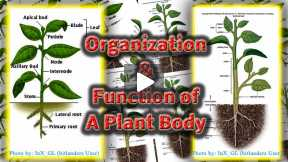My Very First Gallery Review ORGANISATION & FUNCTION OF A PLANT BODY (Complete Gallery)