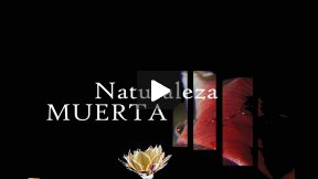 NATURALEZA MUERTA (experimental documentary)