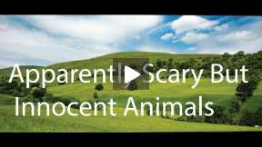 Apparently  scary but innocent animals