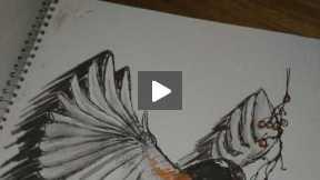 A little birdy being drawn