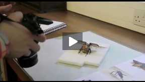 Insect research