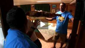 FISHING IN CUBA: OCEAN PETS