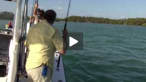 Extreme shark fishing in Key West  eps 020