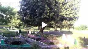 an evening in a graveyard