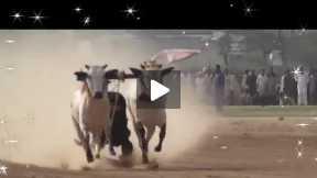 bulls  racing festival part#7