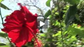 SE BUSCA... Centro América_Honduras_Capítulo 11