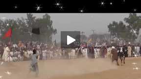 Bull racing festival  day 2 race #8
