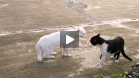 cats funny clip