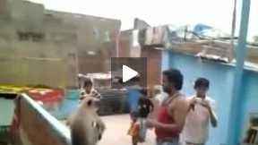 Man slaps d monkey :P xD